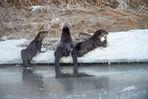 green river, river otter