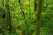 Arenal Rainforest