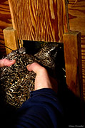 Gunnison Sage-Grouse Relocation