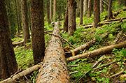 Kilpacker Forest