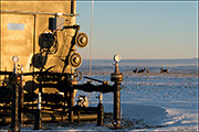 Mule Deer and Gas Equipment
