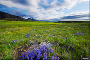 Flatirons Wildflowers