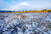 Teton Autumn Changes