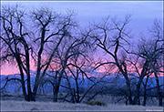 Cottonwood Sunset