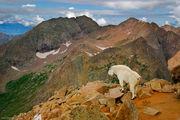 Eolus Mountain Goat