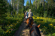 Horseback in the Hoback