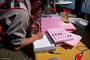 yellowstone lake, lake trout removal project