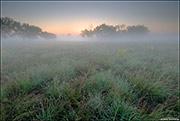 Prairie Grass and Fog