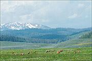 Sandhill Cranes and Wyoming Range