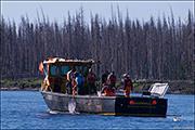 yellowstone lake, lake trout removal