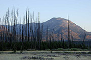Mount Sheridan Through Burned Forest