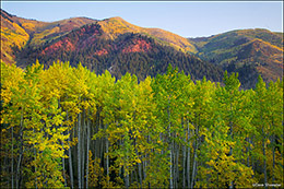 aspen trees, east snowmass creek