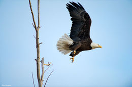 Eagle Liftoff