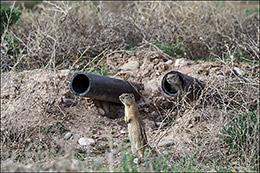 wyoming ground squirrels, predation