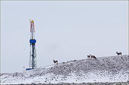 pinedale mule deer herd, natural gas drilling