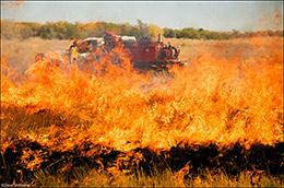 controlled burn, usfs, usfws