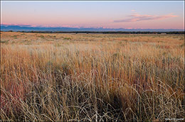 front range, big bluestem
