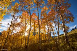 gothic mountain, autumn aspen