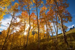 autumn aspen, gothic mountain