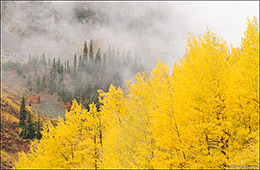 aspen trees, fall color, San Juan Mountains, Silverton