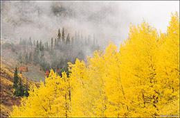 aspen trees, fall color, San Juan Mountains, Silverton