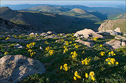 old man of the mountains, Mount Logan, Mount Evans Wildernes