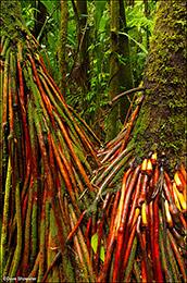 Arenal Rainforest Color
