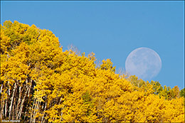 aspen forest, moon