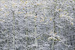 Aspen, Maroon Bells-Snowmass Wilderness Area