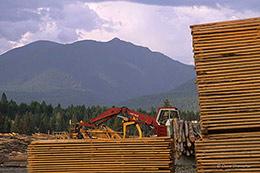 logging, Glacier National Park
