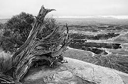 Canyonlands National Park, White Rim, Grandview Point