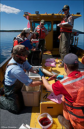 yellowstone lake, lake trout removal