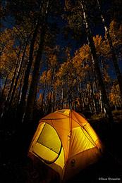 aspen forest, full moon, kebler pass