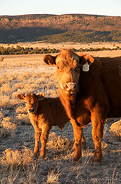 Southeast Colorado, Organic Ranching, Mesa De Maya