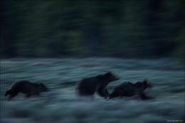 quad mom, grizzly bear, swan lake flats