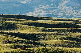 sagebrush hill, Gros Ventre River Valley