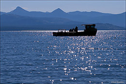 yellowstone lake, sheepshead fishing boat, lake trout removal