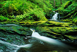 Waydelich Creek, Tongass National Forest