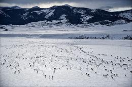 Winter Range