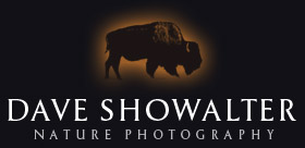 Dave Showalter Nature Photography