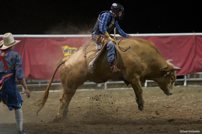 cody night rodeo, bull rider, photo