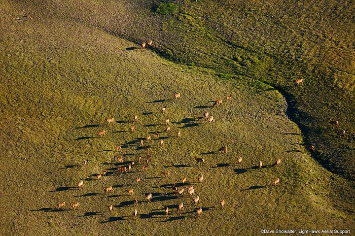 elk, carter mountain, photo