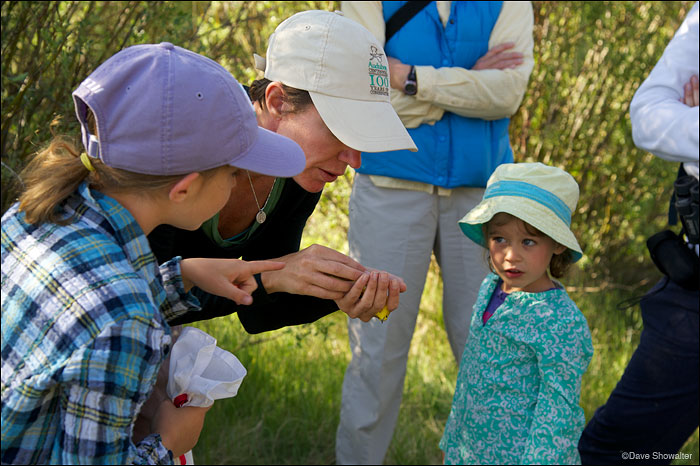 Alison Holloran of Audubon Rockies holds a yellow warbler for Sage and Willow. Soda Lakes Bioblitz on June 23, 2012&nbsp...