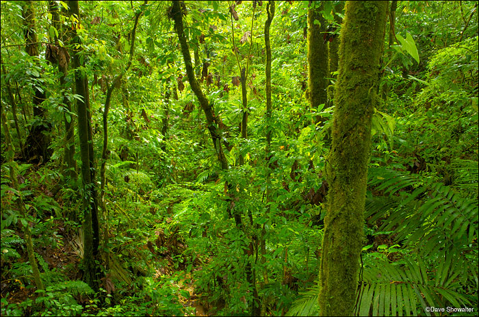 rainforest, vulcan arenal, photo