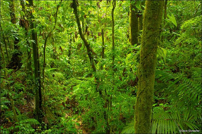 rainforest, vulcan arenal, photo