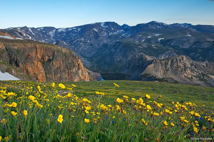 wildflowers, beartooth pass, photo