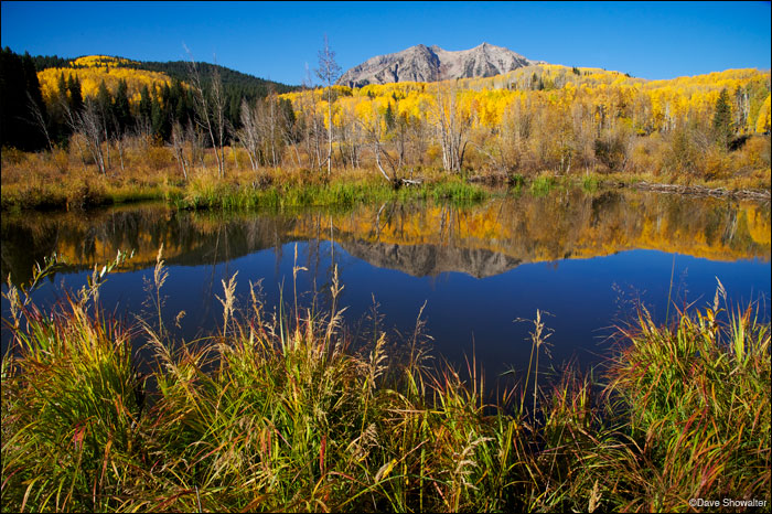 east beckwith mountain, kebler pass, aspen forest, photo