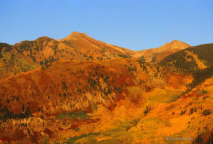 """Autumn golden aspen and ochre red oakbrush create a tapestry of color on a mountainside in """"The Elks."""""""
