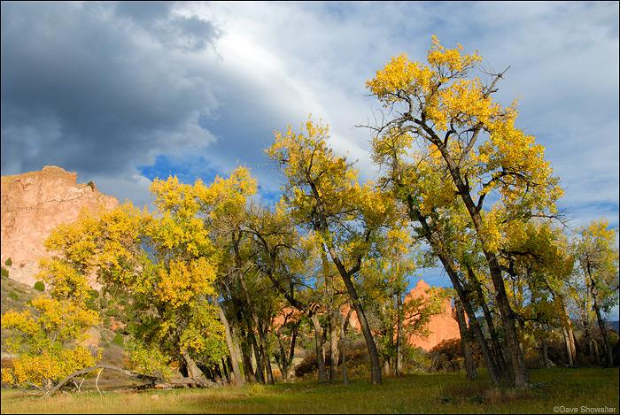 autumn cottonwood, Garden of the Gods, photo