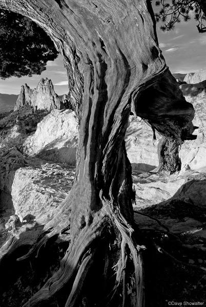 Garden Of The Gods, South Gateway Rock, juniper, photo
